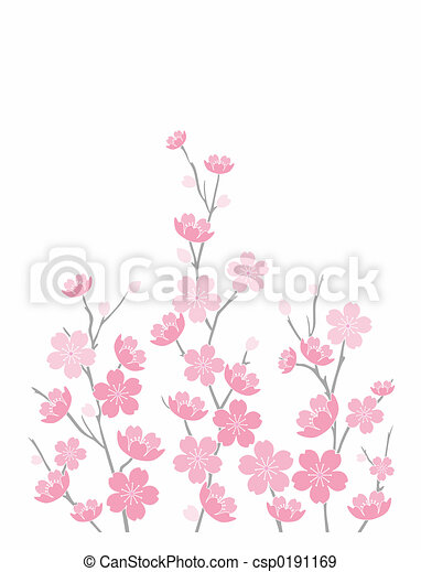 Pink Cherry Blossoms - csp0191169