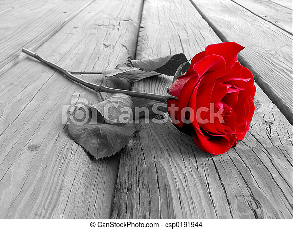 Rose On Wood BW - csp0191944