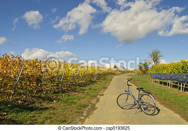 Bicycle in wineyards - csp0193625