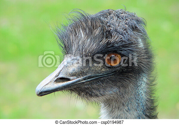 Bird - csp0194987