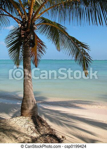 Punta Cana Palm Tree - csp0199424