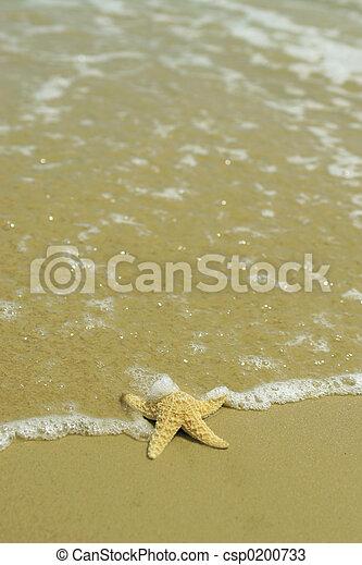 Starfish - csp0200733