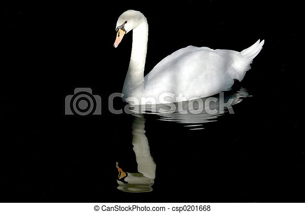 swan in the water - csp0201668