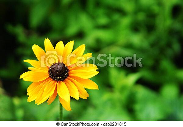Summer Sun - csp0201815