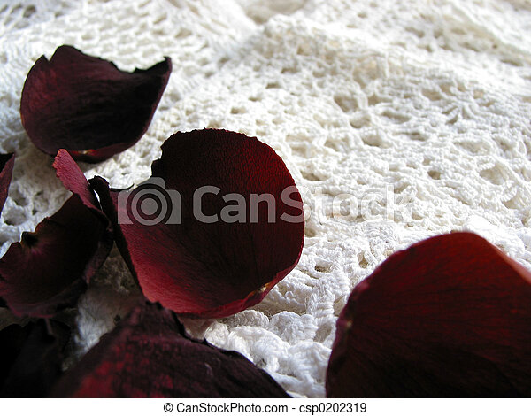 Vintage lace with dry rose petals - csp0202319