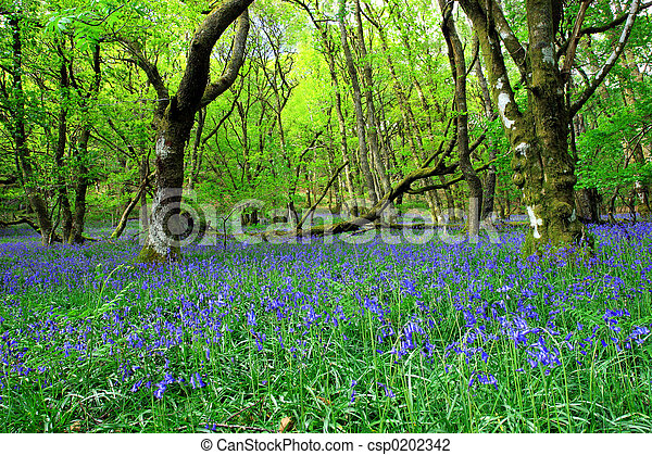 The Ancient Bluebell Forest - csp0202342