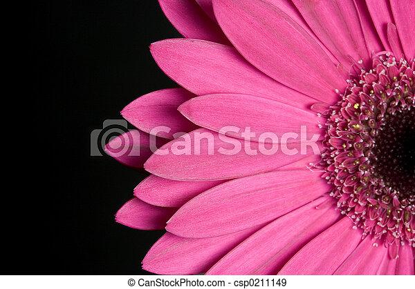 Flower - csp0211149
