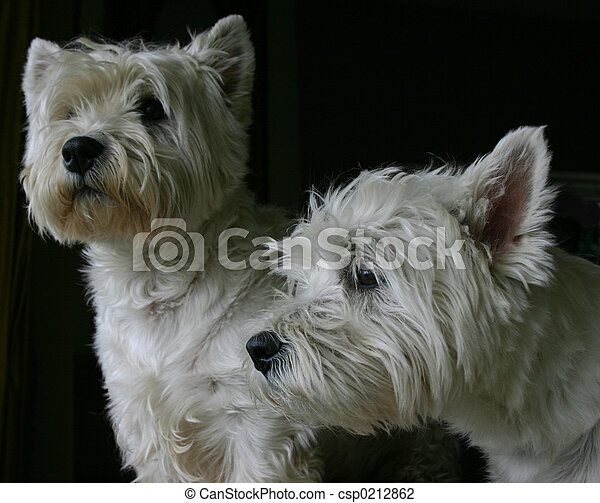 guarding westies - csp0212862