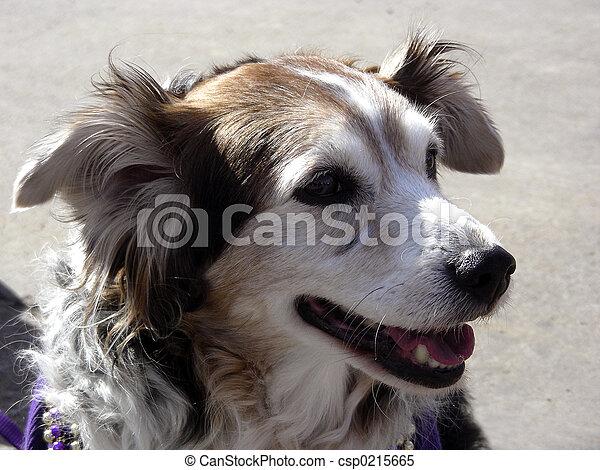 Happy Dog - csp0215665