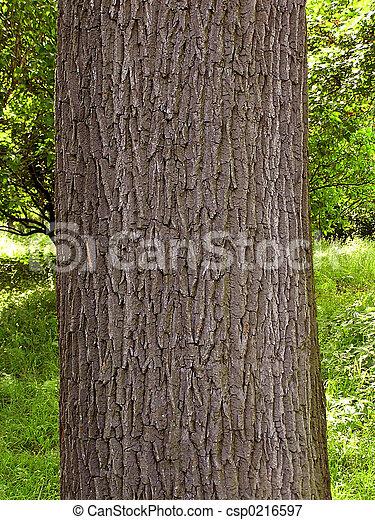 Oak bark - csp0216597