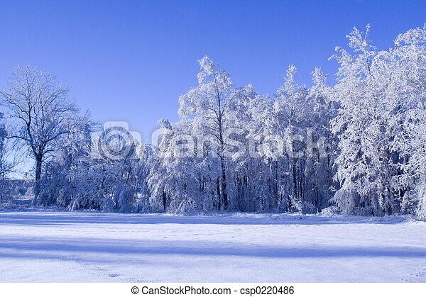 hiver, forêt - csp0220486