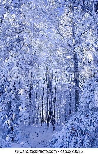hiver, forêt - csp0220535