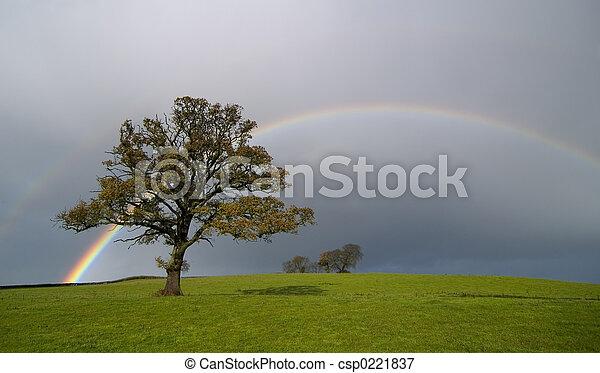 regnbåge - csp0221837