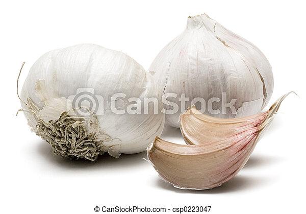 Garlic - csp0223047