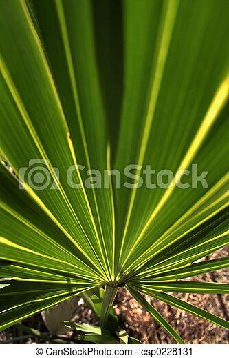 palm frond - csp0228131