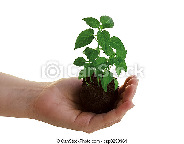 Plant in hand - csp0230364