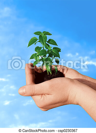 planta, mano - csp0230367