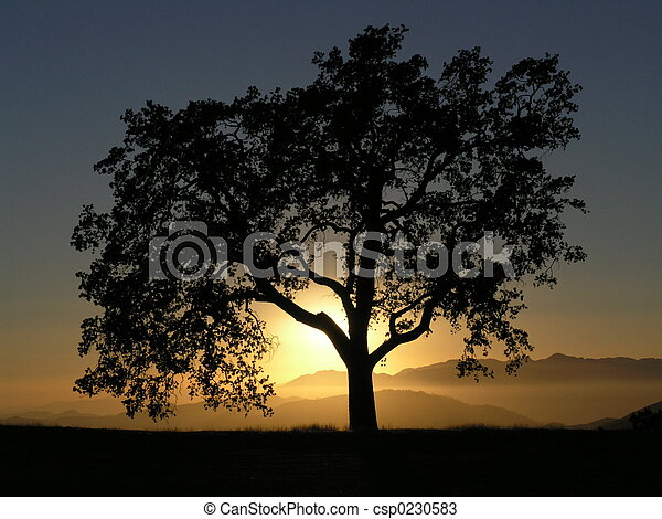 California Oak Sunse - csp0230583