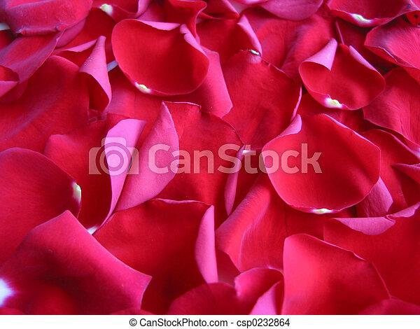 Red rose petals background - csp0232864