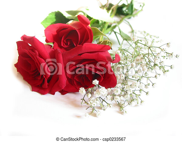 Rose bouquet on white - csp0233567