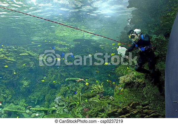 Aquarium - Scuba Diver - csp0237219
