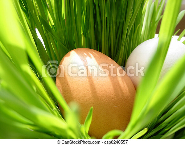 Easter eggs in grass - csp0240557