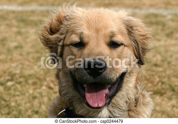 Attentive Pup - csp0244479