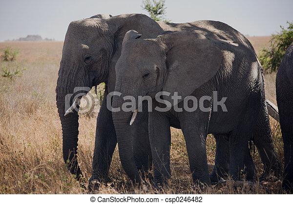 054, 動物, 象 - csp0246482