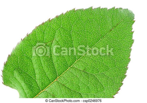 green vivid leaf det - csp0246976