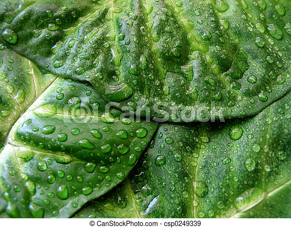 Green leaf texture - csp0249339