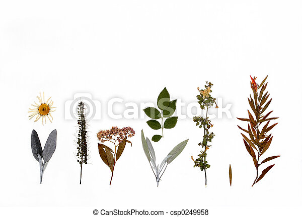 Flowers, Herbs and Plants of Autumn - csp0249958