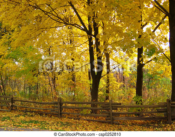 Fall Scenery - csp0252810
