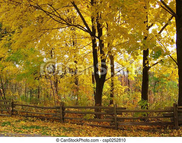 Fall Scenery - csp0252810