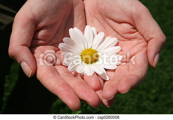 Hand and Flowers - csp0260006