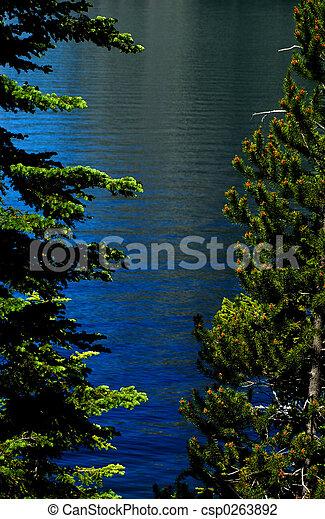 REJUVENATING trees - csp0263892
