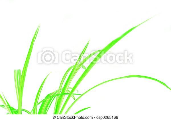 Green Grass - csp0265166