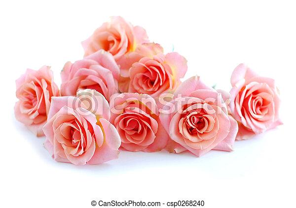 Pink roses on white - csp0268240