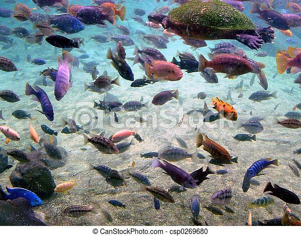 Aquatic Gathering 2 - csp0269680