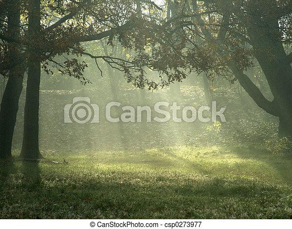 Sunlight through trees - csp0273977
