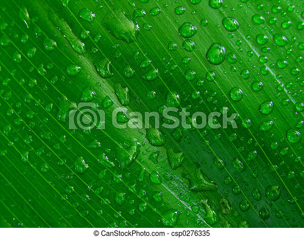 Water droplets on green leaf, - csp0276335