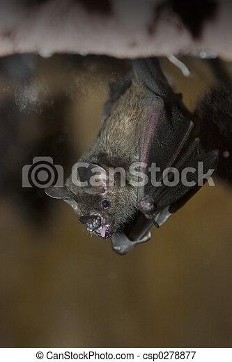 Bat - csp0278877