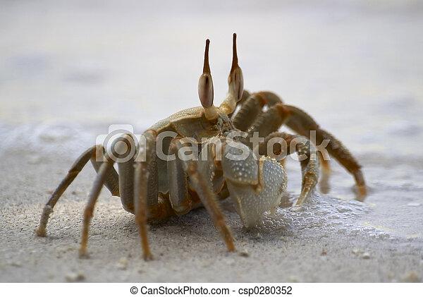 crab beside sea - csp0280352