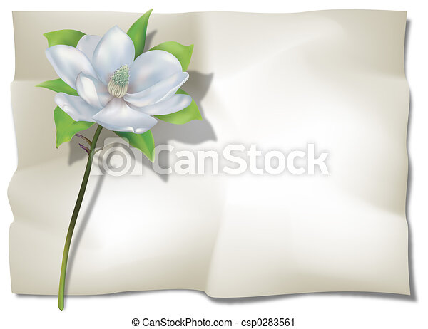 Magnolia on Sheet - csp0283561