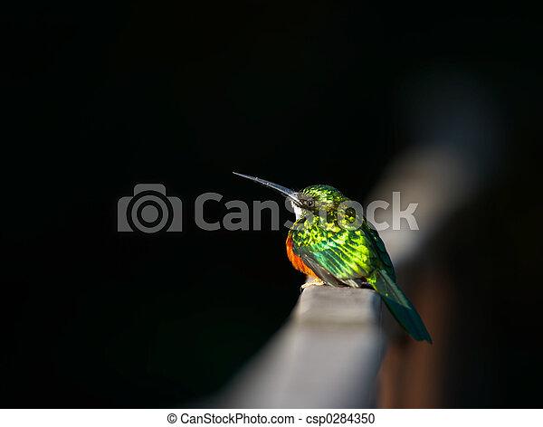 Small exotic bird, Pantanal, Brazil - csp0284350