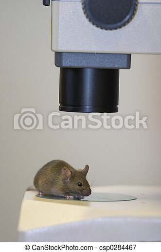 Laboratory mouse under the microscope close-up - csp0284467