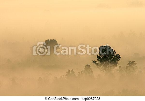 Trees in mist - csp0287928