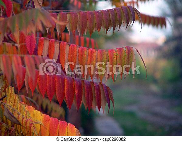 otoño - csp0290082