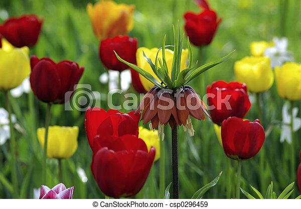 spring flower - csp0296459