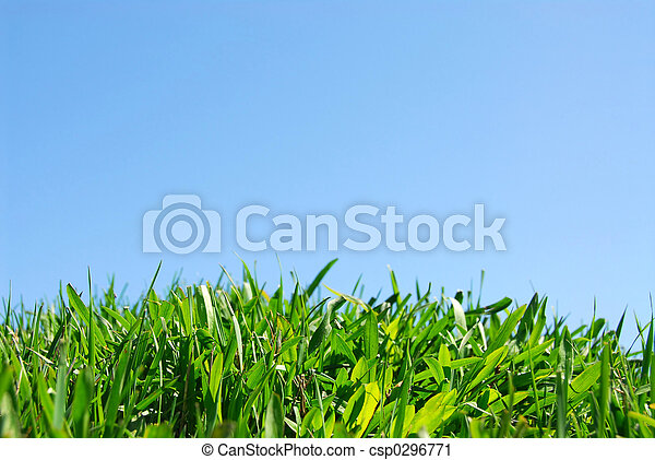 Grass and sky - csp0296771