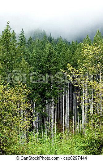Spring forest - csp0297444